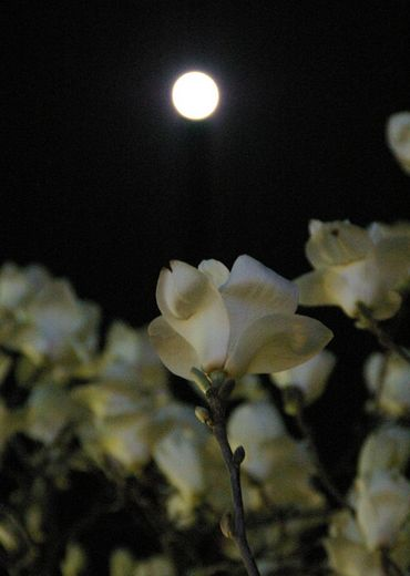 月と花 3.14.jpg