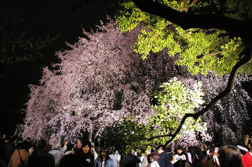 桜 1 緑.jpg