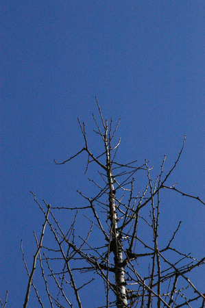 青空と木2.jpg