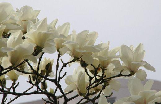 白い花1.JPG