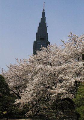 桜タワー 1.jpg